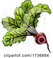 02/14/2021 - Beet Beetroot Vegetable Woodcut Illustration