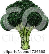 02/14/2021 - Broccoli Vegetable Vintage Woodcut Illustration