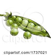 Sweet Peas Pod Vegetable Vintage Style Woodcut