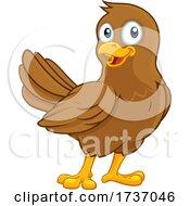 Cute Bird Cartoon Character
