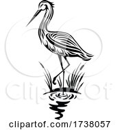 Black and White Heron by Vector Tradition SM #COLLC1738057-0169
