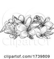 Plumeria Frangipani Tropical Bali Flower Woodcut