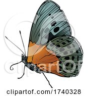 Degands Purple Satinwing Butterfly