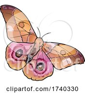 Madagascar Bullseye Butterfly