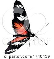Heliconius Melpomene Butterfly
