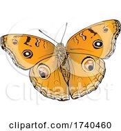 Junionia Almana Butterfly