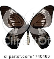 Ornithoptera Goliath Butterfly
