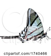 Protographium Marcellus Butterfly