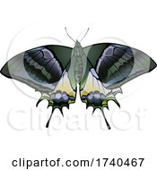 Teinopalpus Aureus Butterfly