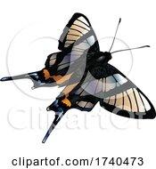 Chorinea Sylphina Butterfly