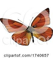 Appias Nero Orange Albatross Butterfly
