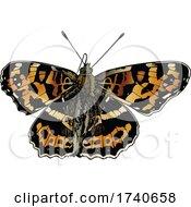 Araschnia Burejana Large Map Butterfly