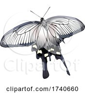 Atrophaneura Alcinous Chinese Windmill Butterfly