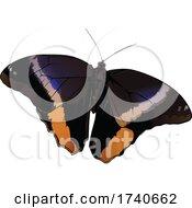 Caligo Atreus Yellow Edged Giant Owl Butterfly