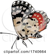 Talicada Nyseus Red Pierrot Butterfly