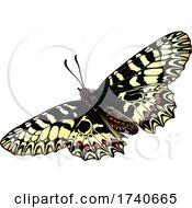 Zerynthia Polyxena Southern Festoon Butterfly