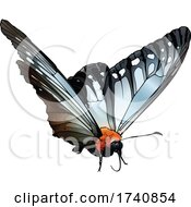 Calinaga Buddha The Freak Butterfly