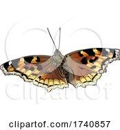 Nymphalis Vaualbum False Comma Compton Tortoiseshell Butterfly