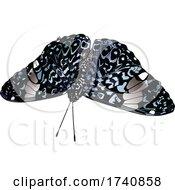 Hamadryas Amphinome Cracker Butterfly