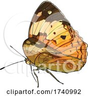 Cupha Erymanthis The Rustic Brush Footed Butterfly