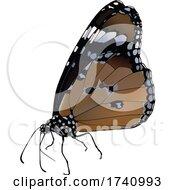 Danaus Chrysippus African Queen Butterfly