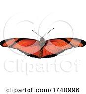 Dryas Iulia Julia Butterfly