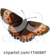 Erebia Ligea Arran Brown Butterfly