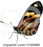 Eueides Isabella Butterfly
