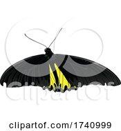 Golden Birdwing Golden Birdwing Butterfly