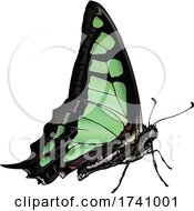Graphium Cloanthus Glassy Bluebottle Butterfly by dero