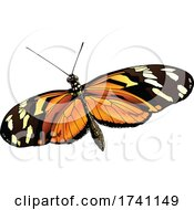 Heliconius Ismenius Tiger Heliconian Butterfly