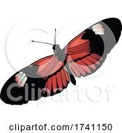 Heliconius Melpomene Postman Butterfly
