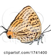 Japonica Saepestriata Butterfly by dero #COLLC1741400-0053
