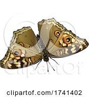 Junonia Lemonias Lemon Pansy Butterfly