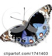 Junonia Orithya Butterfly