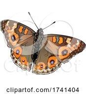 Junonia Villida Butterfly
