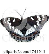Limenitis Populi Poplar Admiral Butterfly