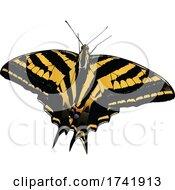 Papilio Pilumnus Butterfly