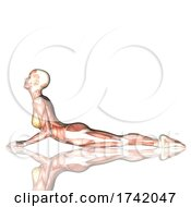 3D Female Figure In Yoga Pose With Muscle Map On A White Background