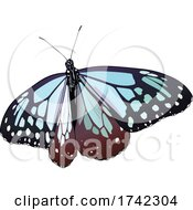 Parantica Sita Butterfly