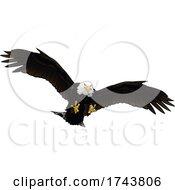 05/12/2021 - Swooping Bald Eagle