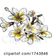 Tropical Plumeria Frangipani Bali Flower Woodcut