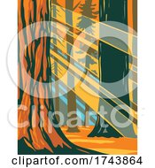 Sunlight Through The Giant Sequoia Trees Of Sequoia National Park Located In Sierra Nevada California WPA Poster Art