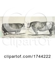 05/18/2021 - Steer And Cow