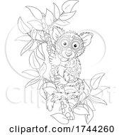 05/21/2021 - Cute Tarsier On A Branch