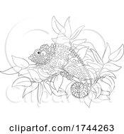 05/21/2021 - Chameleon Lizard On A Branch