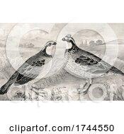 Poster, Art Print Of Quail Pair