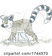 05/25/2021 - Cute Walking Lemur