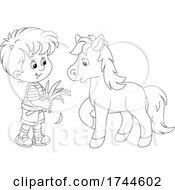 Boy Feeding A Pony