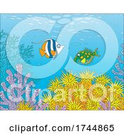 Reef With Fish